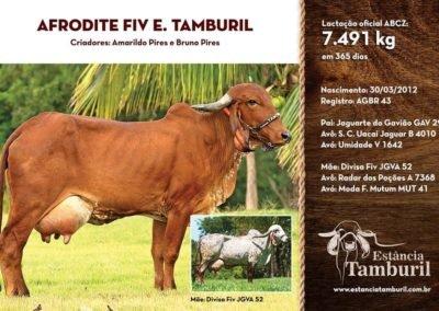 AFRODITE FIV E. TAMBURIL