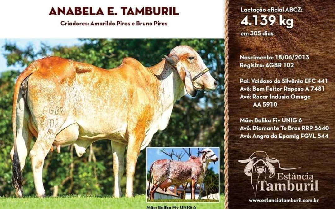 ANABELA E. TAMBURIL
