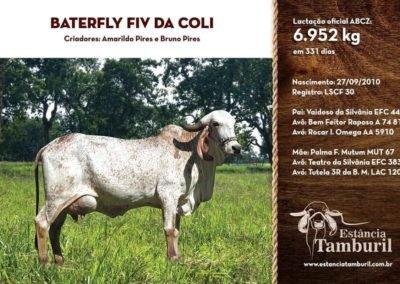 BATERFLY FIV DA COLI