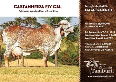 CASTANHEIRA FIV CAL