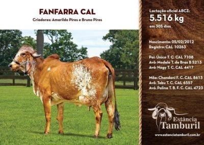 FANFARRA CAL