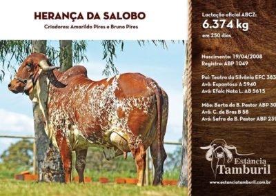 HERANÇA DA SALOBO