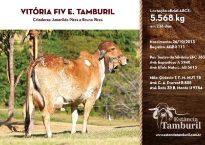 VITÓRIA FIV E.TAMBURIL