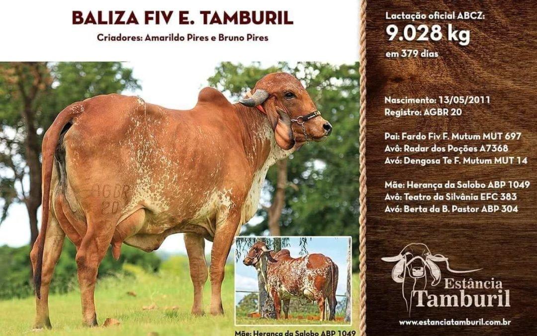 BALIZA FIV E.TAMBURIL
