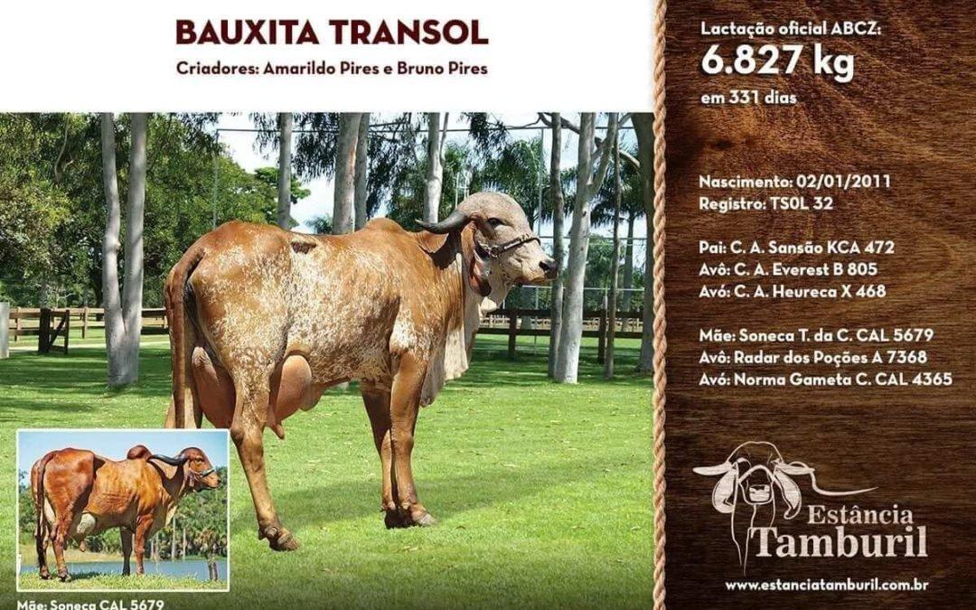 BAUXITA TRANSOL