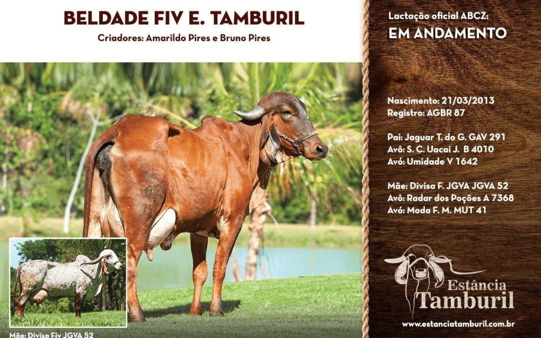 BELDADE FIV E.TAMBURIL