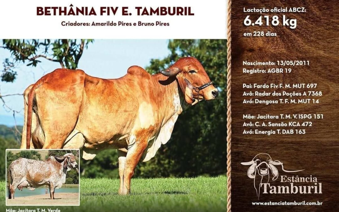 BETHÂNIA FIV E.TAMBURIL