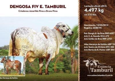 DENGOSA FIV E.TAMBURIL