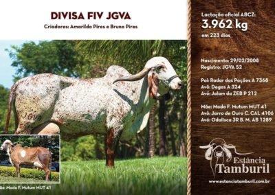 DIVISA FIV JGVA