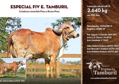 ESPECIAL FIV E.TAMBURIL