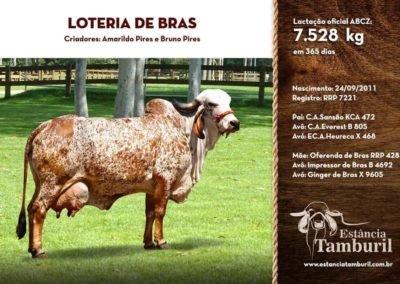 LOTERIA DE BRAS
