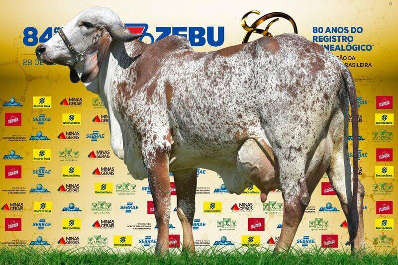 (c) Estanciatamburil.com.br