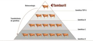 biotecnologia-piramide