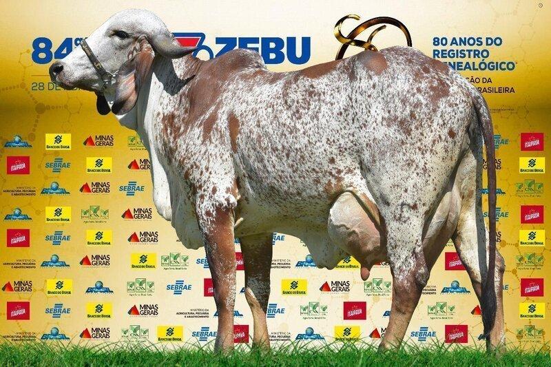 comprar vaca leiteira